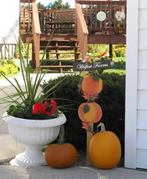 We have thousands of pumpkins to choose from in the fall.  Bring your family to the pumpkin patch for a day of fun!